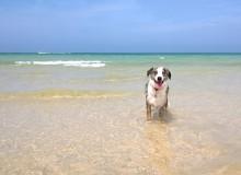 Hundefreundliche Strände in West Cornwall