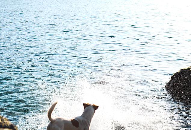 Wild-Swimming-Photo-4