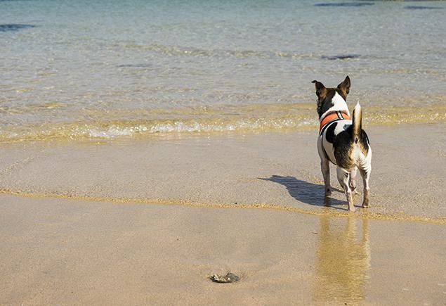 Top 5 der hundefreundlichsten Strände