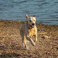 Die Top 5 der hundefreundlichsten Strände