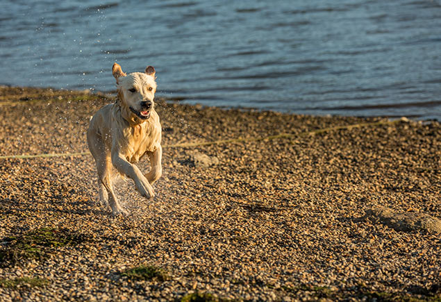 resized-dog-running