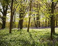 Familienausflug zu den Lost Gardens of Heligan